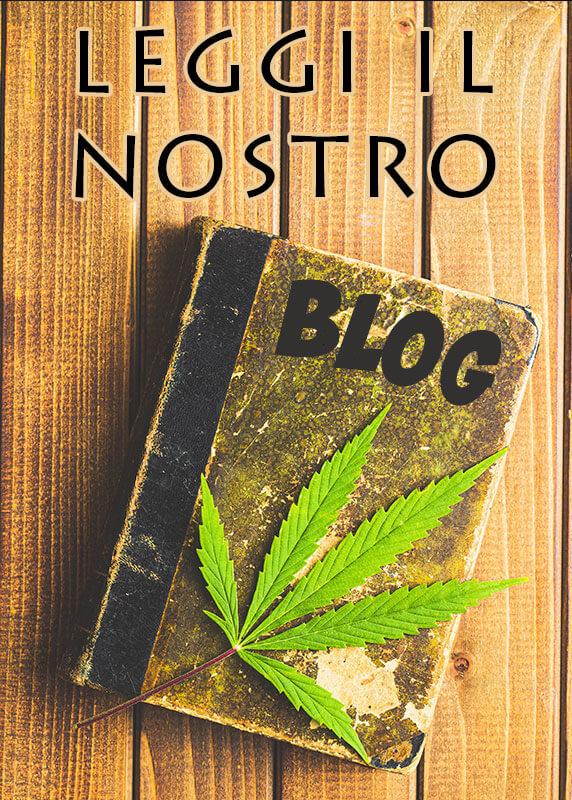 Cannabis light cbd - blog